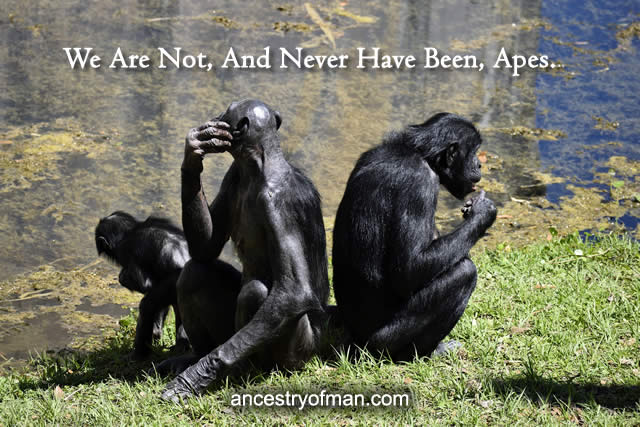 3 apes sitting on the grass